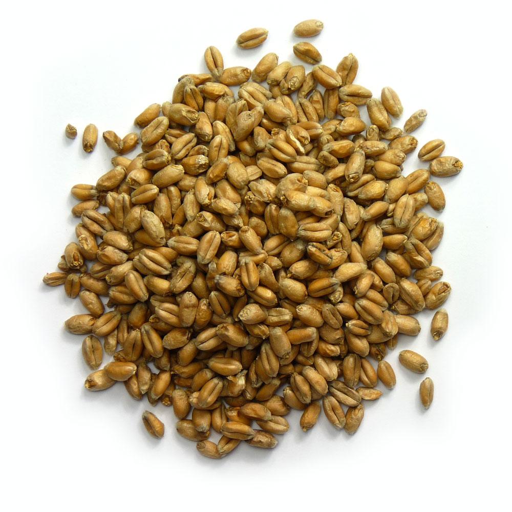 Warminster Maltings - Wheat Malt